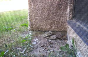 view from my windowLoyalist 2012