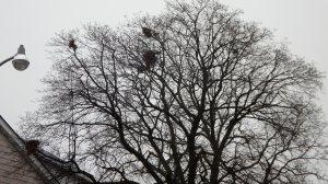 noisy neighbours?