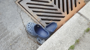 they breed in the sewer