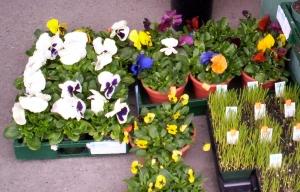 delightful plants