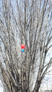 balloons in the tree