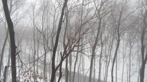 fog03