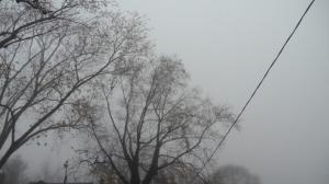 fog01