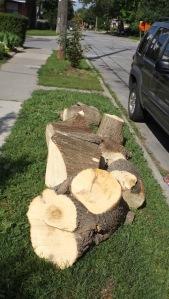 stump02