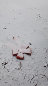 snowribbon
