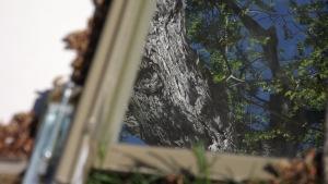 mirror01