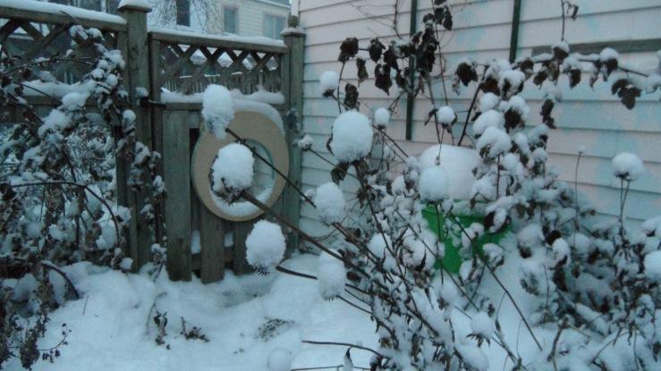 10-snowyard