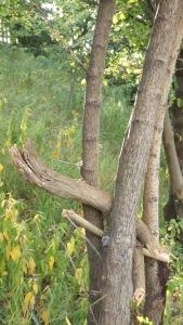 13-treeknot-02