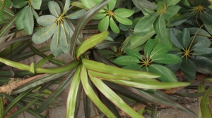 03-greenplants-04